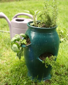 Container gardening in a pocket planter used to grow herbs.