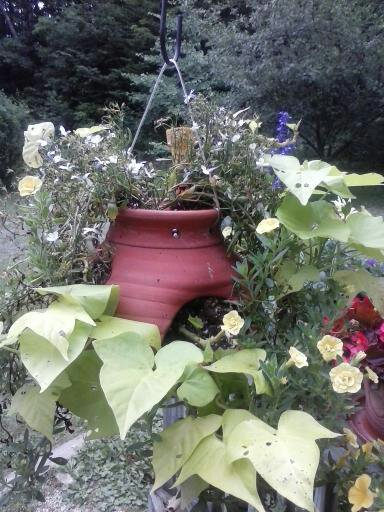 Hanging strawberry pot