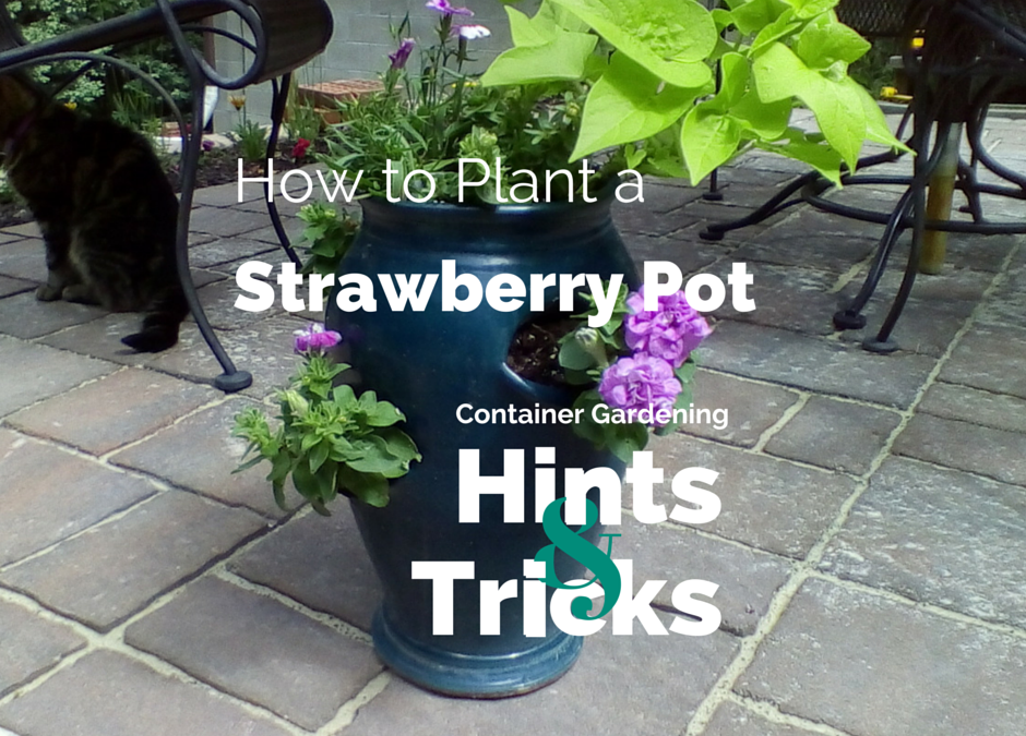 Container Gardening ~Strawberry Style