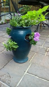strawberry pot container gardening